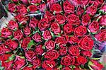 Rosen auf dem Display in den Bloemenmarkt (Blumenmarkt), Amsterdam, Niederlande, Europa