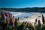 Carmel by the Sea, California, United States of America, North America