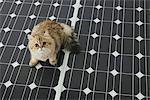 Chat domestique sur panneau solaire