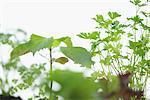 Semis de légumes dans le panier