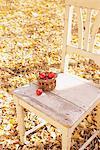 Korb mit roten Kirschen auf Stuhl
