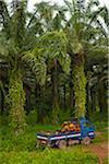 Burundi. Palm oil tree plantations line the shores of lake Tanganyika.