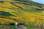 Wanderer, Vineyards, Hesse, Germany