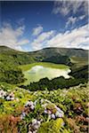 Kratersee mit Hortensien im Vordergrund, Caldeira Funda. Azoren, Portugal