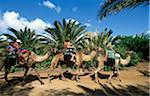 Oasis Park in La Lajita, Fuerteventura, Canary Islands, Spain