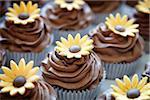 Chocolate Daisy Cupcakes