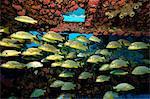 Bancs de poissons