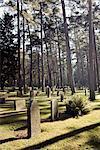 Ein Friedhof, Schweden.