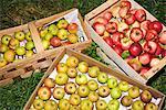 Äpfel in Holzkiste, erhöhte Ansicht