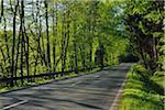 Route dans la forêt, Arnsberg, Haut-Sauerland, Rhénanie du Nord-Westphalie, Allemagne