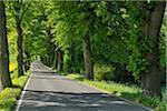 Bordée d'arbres Road, Waterford, Soest District, Suedufer, Rhénanie du Nord-Westphalie, Allemagne