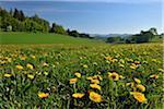 Dommel, Ottlar, Diemelsee, Hesse, Waldeck-Frankenberg, Allemagne