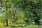 Path, Usseln, Willingen, Waldeck-Frankenberg, Hesse, Germany
