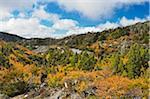 Hêtre à feuilles caduques à l'automne, Cradle Mountain-Lake St Clair National Park, Tasmania, Australie