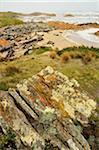 Shore near Arthur River, Tarkine, Arthur Pieman Conservation Area, Tasmania, Australia