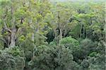 Temperate Rainforest, Tarkine, Arthur Pieman Conservation Area, Tasmania, Australia