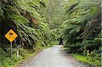Nasse Straße durch den Regenwald, Tarra-Bulga-Nationalpark, Victoria, Australien