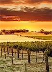 Vineyard Sunset in the Barossa Valley