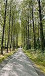 Umberslade une avenue de la voie de chemin d'arbres peupliers