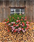 Firewood and Geraniums Beneath Window
