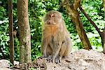 monkey sitting on the stones, Thailand