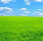Beautiful summer landscape. A green field, blue sky