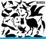 vector set of various birds
