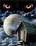 Dark series - full moon. Horror in night