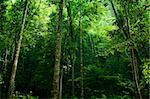 Sunlight shine thru the green forest