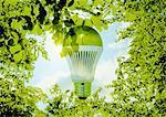 LED bulb and fresh green