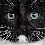 Close-up portrait of a black kitten