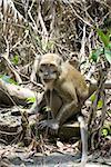 a monkey on the monkey forest park