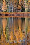 Autumn Trees fall Michigan colors beautiful red orange bird pond