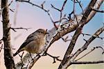 little bird on the tree