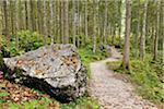 Path in Zauberwald, Berchtesgaden National Park, Bavaria, Germany