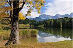 Érable à l'automne, lac Wagenbruechsee, Gerold, Werdenfelser Land, Haute-Bavière, Bavière, Allemagne