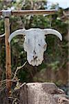 Crâne, Nouveau-Mexique, États-Unis