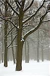 Misty winter landscape. Retro look