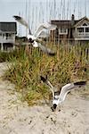 Seagulls swooping down onto beach.