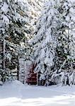 Gate in a woods