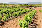 Vineyards in Montferri ( Alt Camp ), Tarragona province, Catalonia, Spain