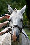 washing white horse