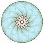 Floral mandala on the white background