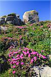 Hottentot Figs among Rocks, Baia Santa Reparata, Sardinia, Italy