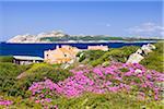 Hottentot Fig and House, Baia Santa Reparata, Santa Teresa Gallura, Province Olbia-Tempio, Sardinia, Italy