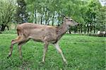 On a photo deer in wood