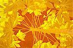 Yellow tapioca on orange background with text space