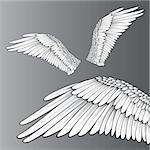 Wings (Realistic Illustration / Design Elements)