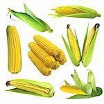 Set of corn isolated on white background