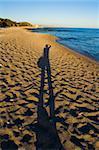Sandy beach on the Aegean coast. Rhodes